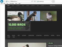 thumbnail image of 10,000 Birds